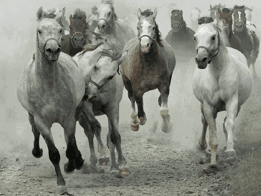 HORSE STAMPEDE copy
