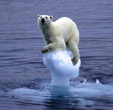polar bear-berg copy