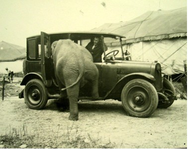 ELEPHANT IN CAR