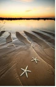 STARFISH ON BEACH @ SUNSET