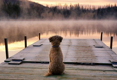 DOG ON DOCK, WAITING