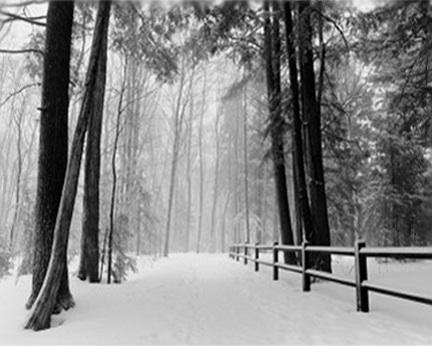 SNOWY ROAD IN WOODS