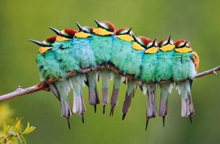 9 BIRDS ON A TWIG
