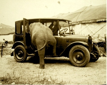 ELEPHANT IN CAR-SEPIA TONE