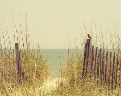 BEACH FENCE GRASS BIRD