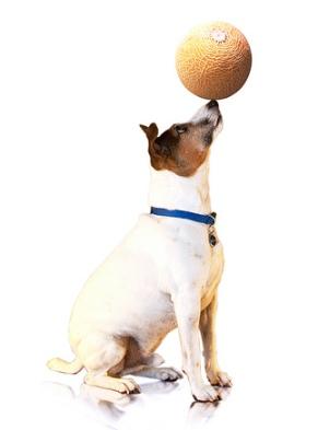 Dog-trick-ball