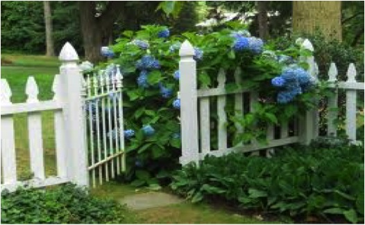 GATE & HYDRANGEAS LARGE