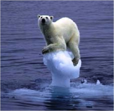 POLAR BEAR ON ICE FLOE