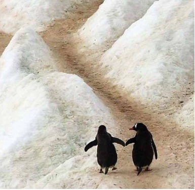 2-penguins-on-ice-copy