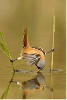JULY-BIRD STRETCH