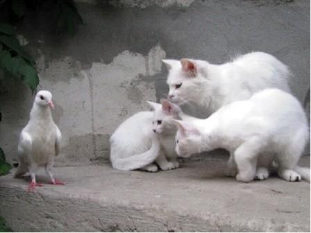 CATS & PIGEON