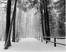 trees winter road