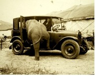 ELEPHANT OLD CAR