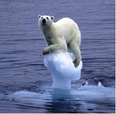 POLAR BEAR IN ICE BLOCK