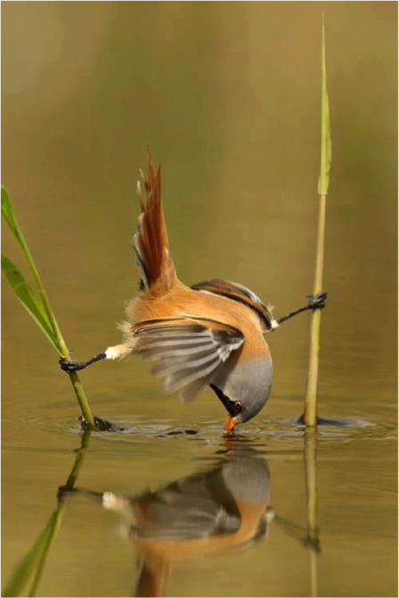 BIRD STRETCHED ON WATER