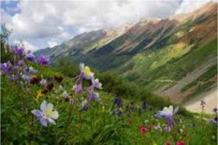 Colorado mountains range & columbines, state flower