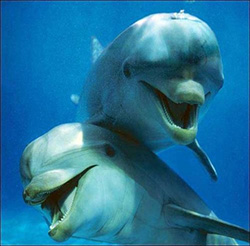 DOLPHINS SMILING_250W