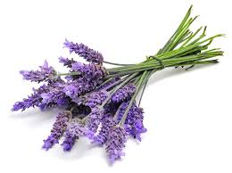 Lavender, for peacefulness, serenity & sleep