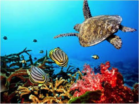 SEA TURTLE & CORAL