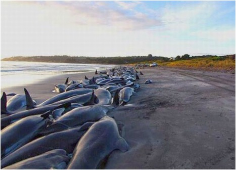 DOLPHINS BEACHED