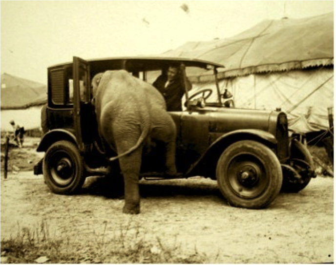 elephant-in-old-car-large